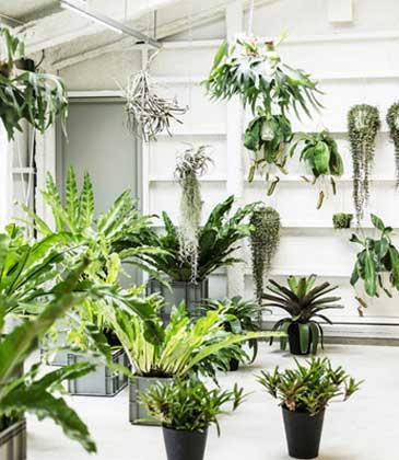 Biljke za Vašu